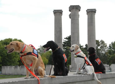 Four Dogs at Freedom